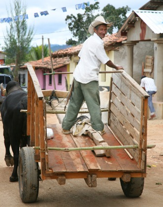 Oxen are still and integral part of rural life.